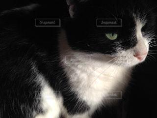 猫が好きの写真・画像素材[120958]