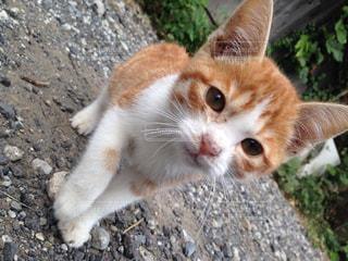 猫が好き - No.120960