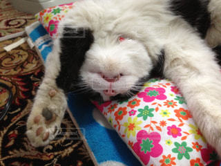 猫三昧の写真・画像素材[120985]