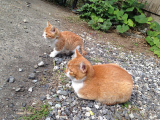 猫三昧の写真・画像素材[120992]