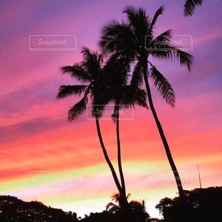 日没前のヤシの木の写真・画像素材[2171758]