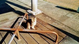 うとうとする猫の写真・画像素材[2164715]