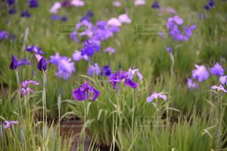花のクローズアップの写真・画像素材[2173794]