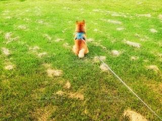 愛犬の粋な後ろ姿の写真・画像素材[2406771]