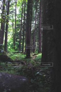 森の写真・画像素材[3600947]