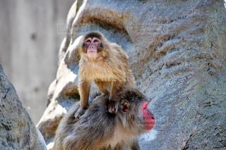 猿の写真・画像素材[2159375]