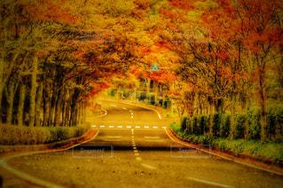 秋の写真・画像素材[251453]