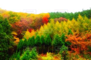 風景 - No.254678