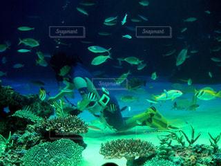 ダイバーと魚の写真・画像素材[2189935]