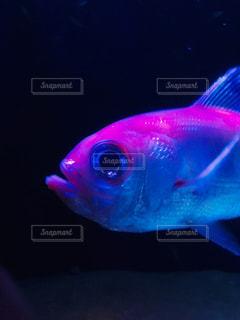 ビビッドな魚の写真・画像素材[2193916]