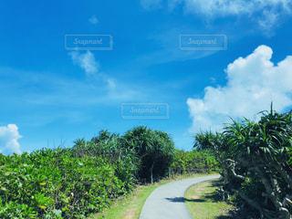 常夏の島の写真・画像素材[2309136]