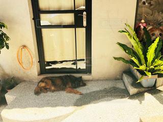 台湾の野良犬の写真・画像素材[2318305]
