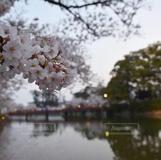 桜の写真・画像素材[2161578]