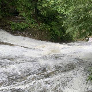 森の中を走る川の写真・画像素材[2183913]
