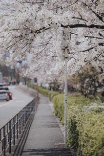 花の写真・画像素材[2162104]