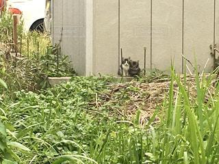 草の中にたたずむ仲良し子猫の写真・画像素材[3188420]