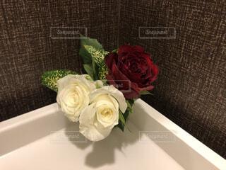 花のクローズアップの写真・画像素材[4287821]
