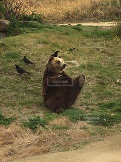 動物園の写真・画像素材[2163265]
