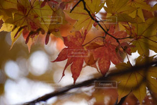 自然の写真・画像素材[227738]