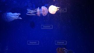 クラゲ〜の写真・画像素材[2203995]