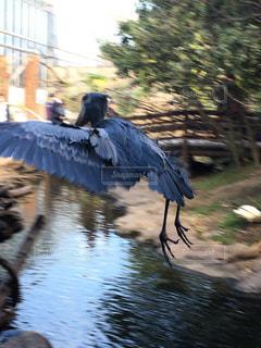 水の中を泳ぐ鳥の写真・画像素材[850548]