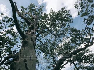 木の枝にとまった鳥の写真・画像素材[2169509]