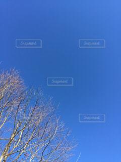 冬の青空の写真・画像素材[2372473]