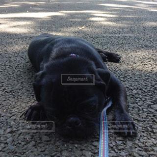 犬の写真・画像素材[622382]