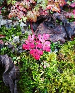 鮮やかな葉の写真・画像素材[2166822]