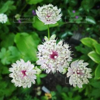 魅力的な花の写真・画像素材[2167161]