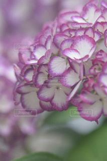 花の写真・画像素材[2167729]