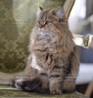 猫の写真・画像素材[2167750]