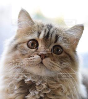 猫の写真・画像素材[2167759]