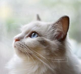 猫の写真・画像素材[2167785]