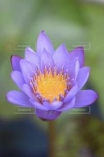 花のクローズアップの写真・画像素材[3524785]