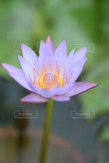 花のクローズアップの写真・画像素材[3656290]