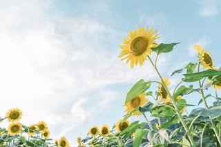 夏が来たの写真・画像素材[2335366]