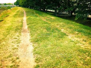 草と木のある小道の写真・画像素材[2177839]