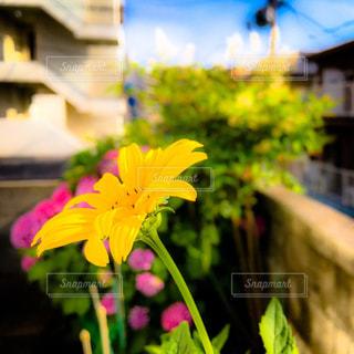 庭に咲く小さな幸せの写真・画像素材[2187055]
