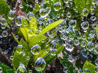 雨上がりの雫の写真・画像素材[2256703]