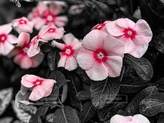 雫と花の写真・画像素材[2256704]