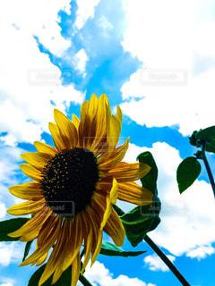 夏の青空に咲く笑顔の写真・画像素材[2285728]