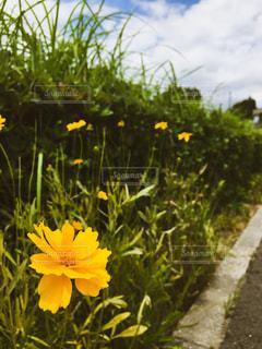 夏の花の写真・画像素材[2317709]