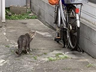 強く生きる猫の写真・画像素材[2168225]