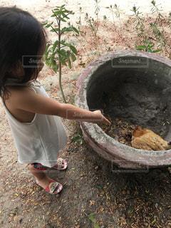 ニワトリ、ヨシ! をしている小さな女の子の写真・画像素材[2180141]