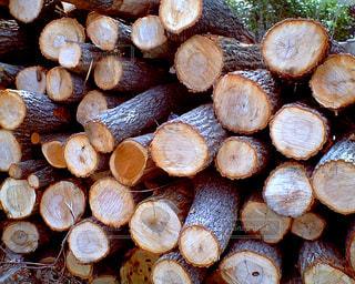 木の写真・画像素材[2168744]