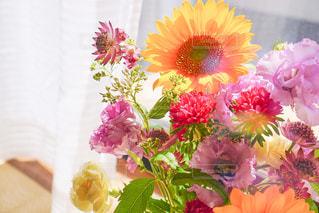 窓辺の花の写真・画像素材[2442084]