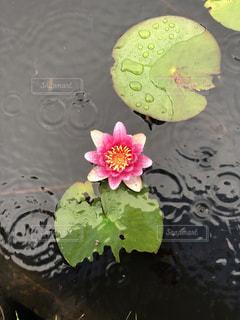 水の池のクローズアップの写真・画像素材[2219638]