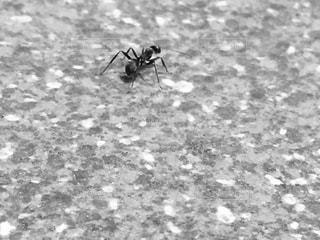 蟻の写真・画像素材[2237959]