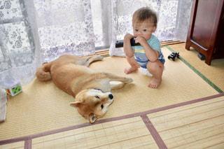 犬を飼っている小さな男の子の写真・画像素材[2170639]